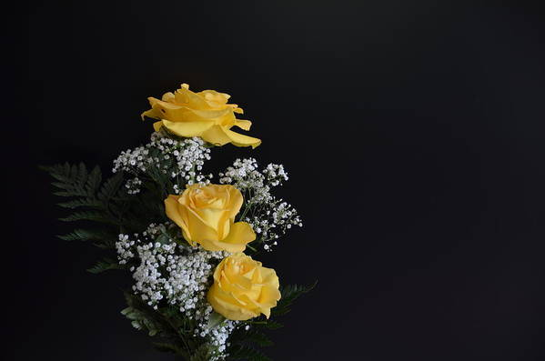Flowers Art Print featuring the photograph Yellow Roses by Raju Alagawadi