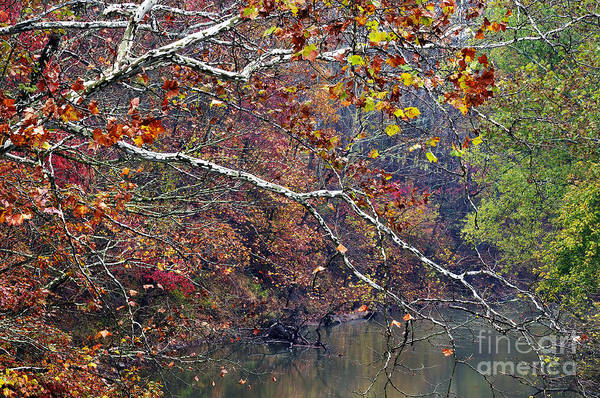 West Fork River Art Print featuring the photograph Fall Along West Fork River by Thomas R Fletcher