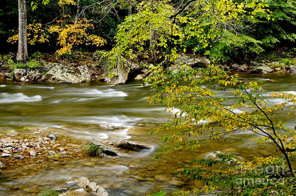 West Virginia Art Print featuring the photograph Fall Along Williams River by Thomas R Fletcher