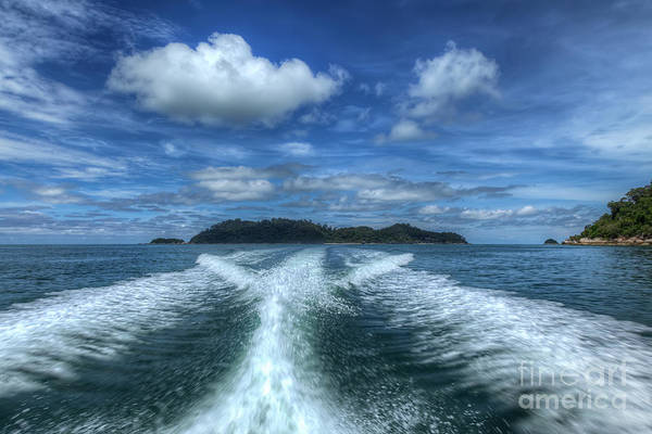 Tropical Art Print featuring the photograph Cruising by Adrian Evans