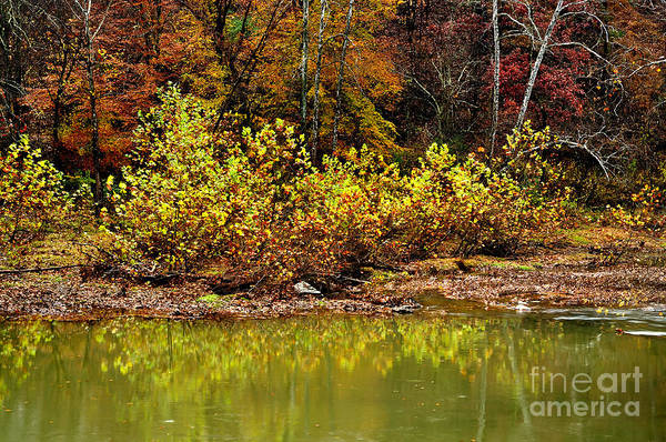 West Virginia Art Print featuring the photograph Fall Along West Fork River by Thomas R Fletcher