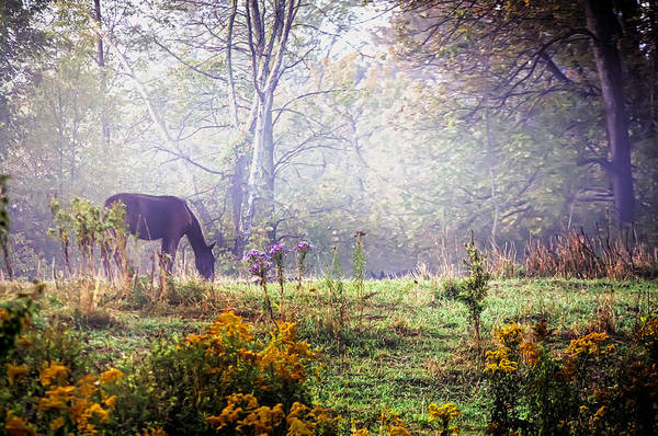 Ajnphotography Art Print featuring the photograph Horse In The Mist by Alan Norsworthy