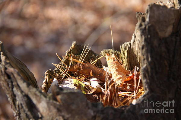 Ancaster Art Print featuring the photograph Leaves In Stump by George Novakovich