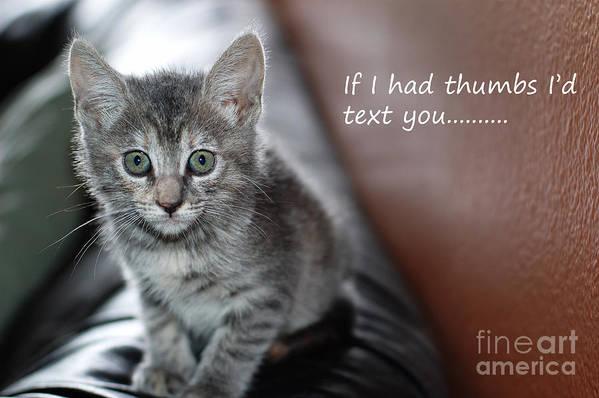Kitten Art Print featuring the photograph Little Kitten Greeting Card by Micah May