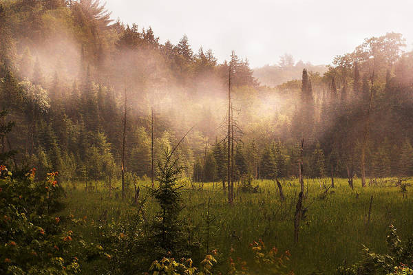 Algonquin Park Art Print featuring the photograph Afternoon Mist by Linda McRae