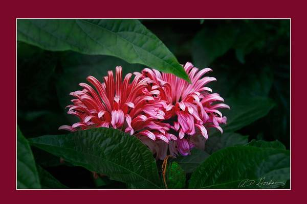 Flowers Art Print featuring the photograph At Center by Richard Gordon