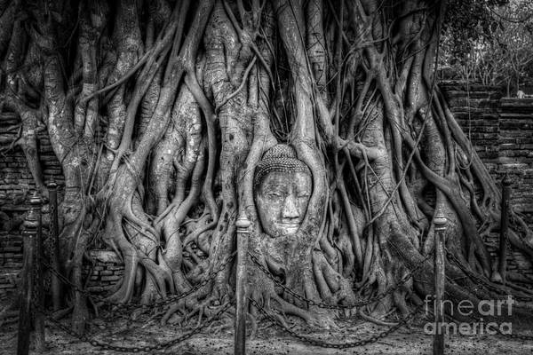 Ayutthaya Art Print featuring the photograph Banyan Tree by Adrian Evans