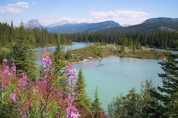 Bow River Art Print featuring the photograph Bow River Banff National Park Canada by Linda McRae