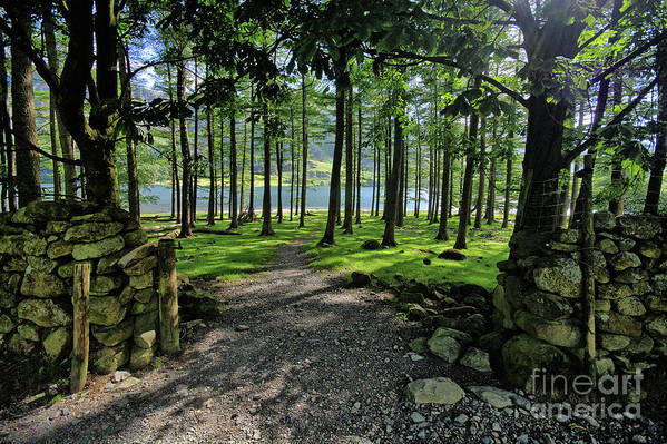 Buttermere Art Print featuring the photograph Buttermere Woods by Smart Aviation