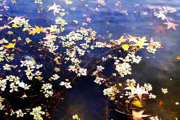 Water Art Print featuring the photograph Death Among The Leaves by Kenna Westerman