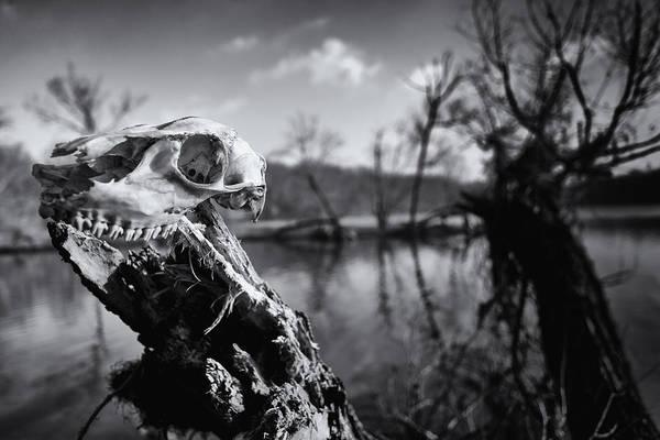 Bucks County Art Print featuring the photograph Deer Skull by David Oakill