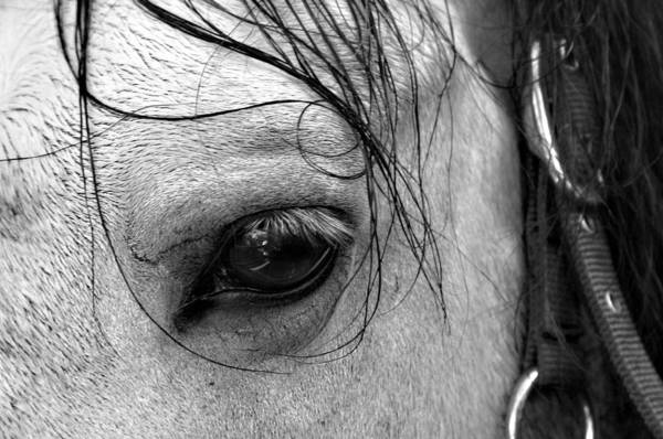 Photographer Art Print featuring the photograph Eye Of The Stallion by Jez C Self
