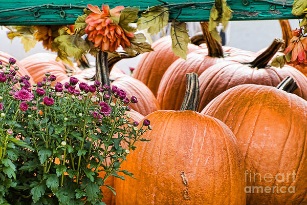 Pumpkins Art Print featuring the photograph Fall Display by Edward Sobuta