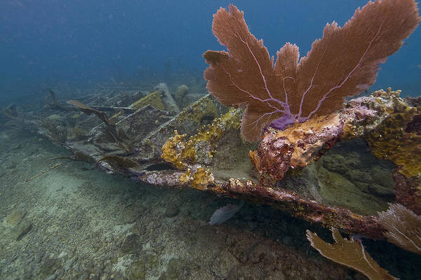 Coral; Atlantic Ocean; City Of Washington; Elbow Reef; Florida; Key Largo; Scuba Diving; Underwater Art Print featuring the photograph Fan Coral On Elbow Reef In Key Largo by Bob Hahn