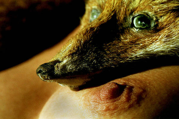 Fox Art Print featuring the photograph Foxy Lady by Michael Mogensen