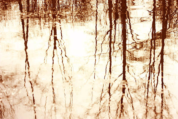 Reflection Art Print featuring the photograph In Reflection by Barbara White