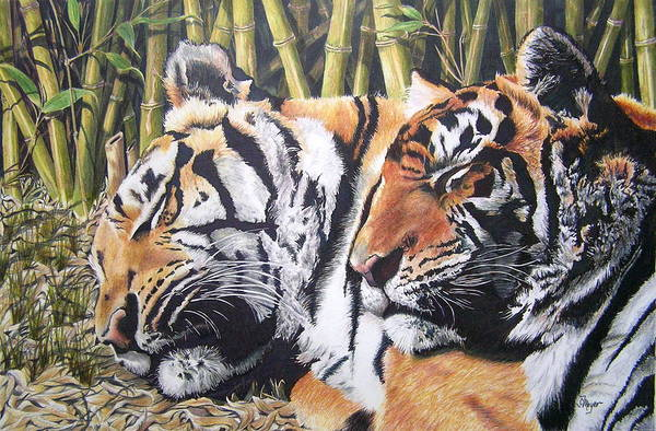 Animals Art Print featuring the drawing Let Sleeping Tigers Lie by Susan Moyer