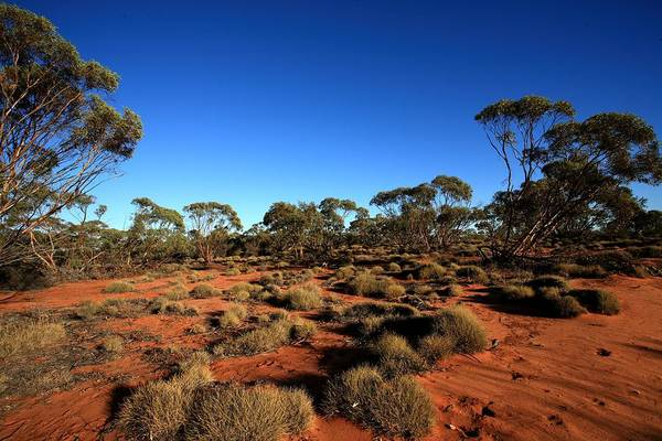 Mallee Art Print featuring the photograph Mallee And Spinifex by Tony Brown