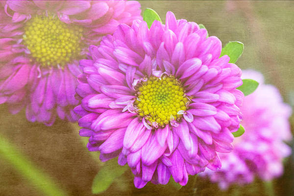 Florals Art Print featuring the photograph Morning Delight by Arlene Carmel