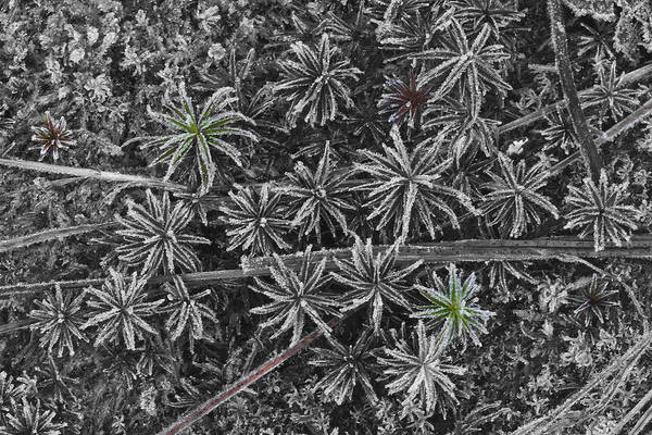 Moss Art Print featuring the photograph Moss Near Mirror Lake by Jim Dohms