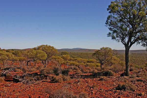 View To Mt Singleton From Homestead Ridge Trail. This Area Of Western Australia Is Rich In Iron Ore Art Print featuring the photograph Mount Gibson Station Wa by Tony Brown