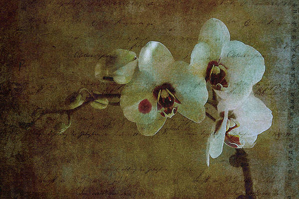 Orchid Art Print featuring the photograph Orchid by Inesa Kayuta