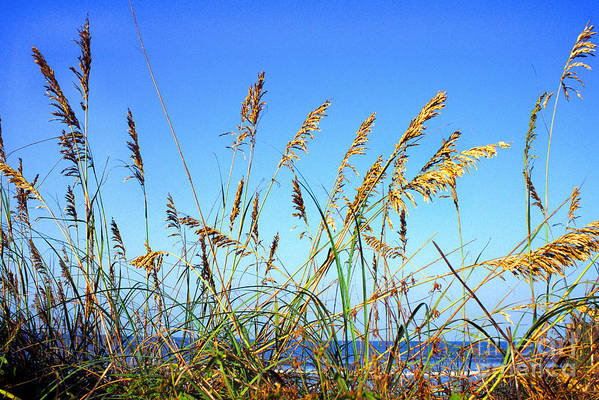 Sea Art Print featuring the photograph Sea Oats And Sea by Thomas R Fletcher