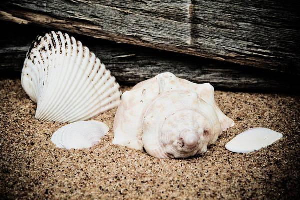 America Art Print featuring the photograph Shells On The Beach by David Hahn