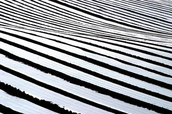Photographer Art Print featuring the photograph Stripy Land by Jez C Self