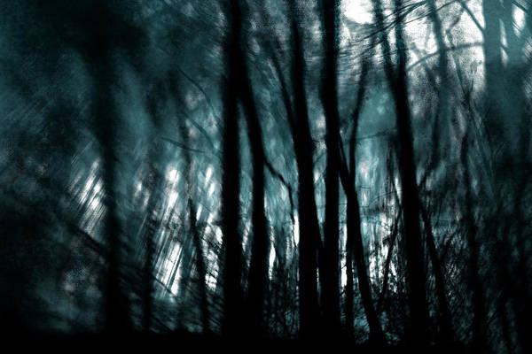 Digital Photography Art Print featuring the photograph Trees by Tony Wood
