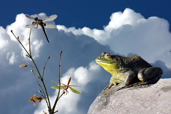 Frog Art Print featuring the photograph Where Dragonflies Grow On Trees by Barbara White