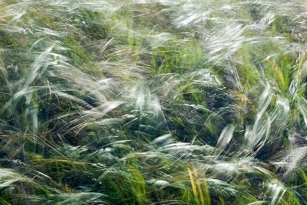 Foxtails Art Print featuring the photograph Who Has Seen The Wind by Linda McRae