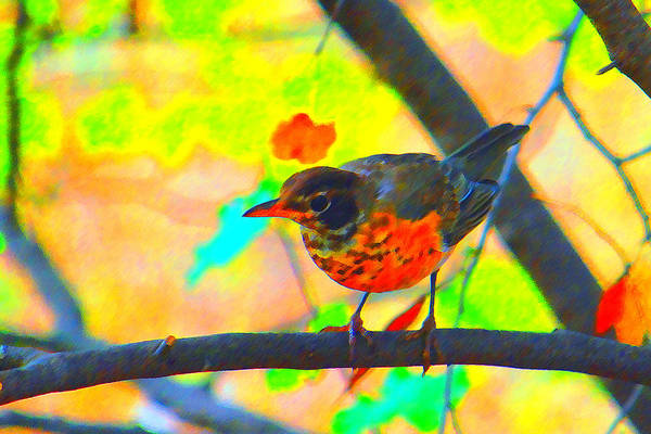Brushed Robin Art Print featuring the photograph Brushed Robin by Edward Swearingen