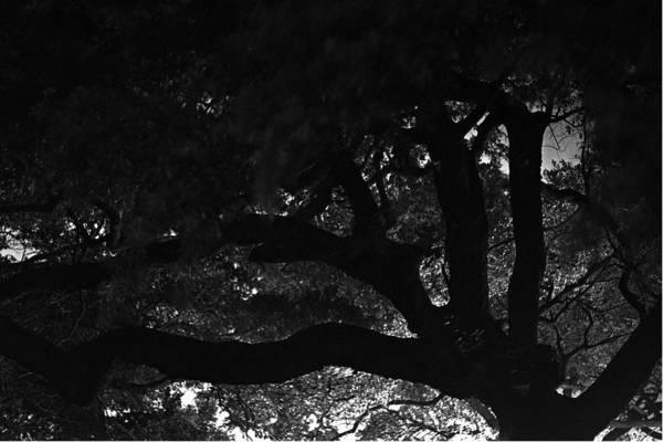 Oak Tree At Night Art Print featuring the photograph Oak Tree At Night by Edward Swearingen