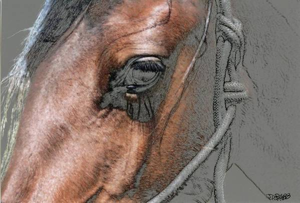 Horse Art Print featuring the photograph Tank by Jim Babb