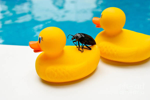 Absurd Art Print featuring the photograph Waterbug Takes Yellow Taxi by Amy Cicconi