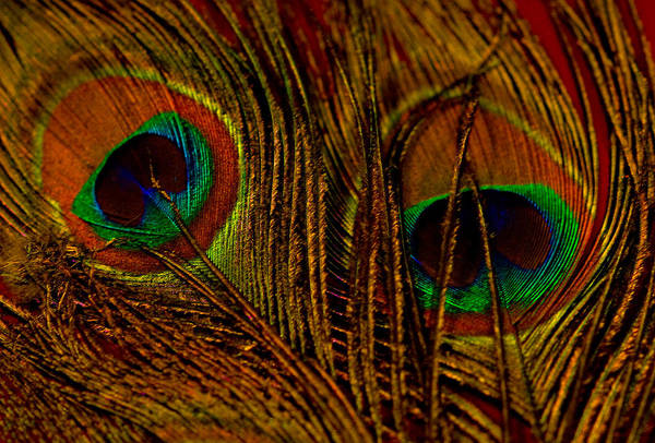 Feathers Art Print featuring the photograph Eyes by Corrie Zacharias