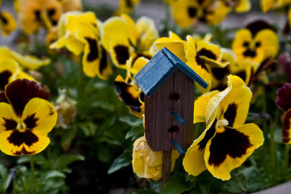 Pansy Art Print featuring the photograph Bird House And Pansey by Douglas Barnett