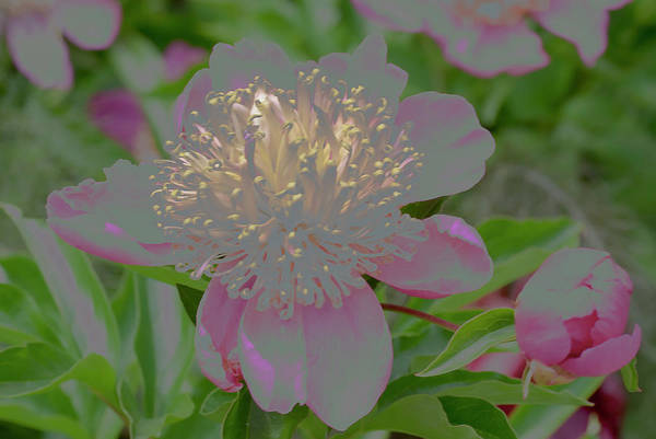 Crystalline Flower Art Print featuring the photograph Crystalline Flower by Don Wright