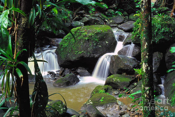 Puerto Rico Art Print featuring the photograph El Yunque National Forest Waterfall by Thomas R Fletcher