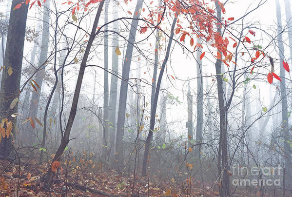 West Virginia Art Print featuring the photograph Misty Woodland Showing The Last Fall Color by Thomas R Fletcher