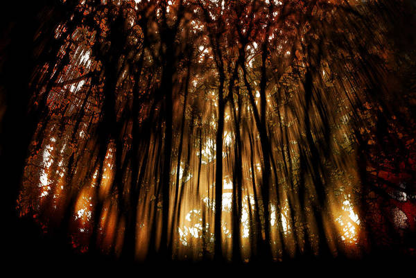 Digital Photography Art Print featuring the photograph Trees 2 by Tony Wood