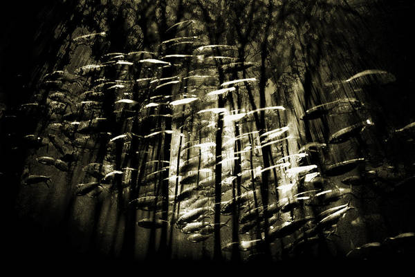 Digital Photography Art Print featuring the photograph Untitled 2 by Tony Wood
