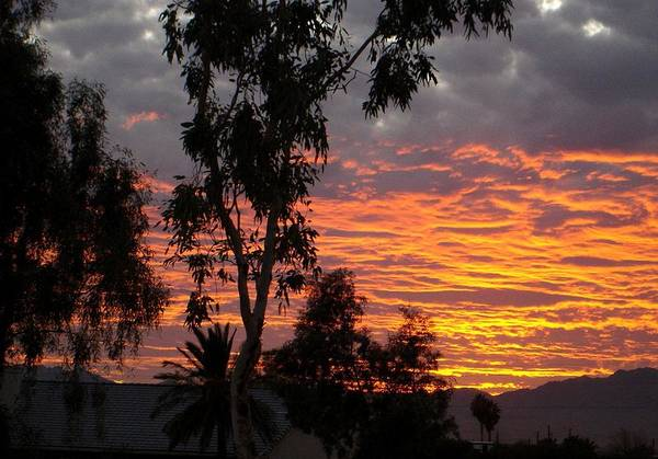 Arizona Art Print featuring the photograph Arizona Sunset by Lessandra Grimley