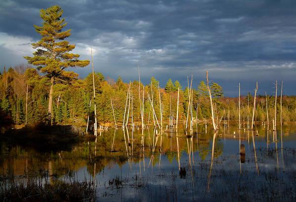 Wetlands Art Print featuring the photograph A Fleeting Sunset Moment by Linda McRae