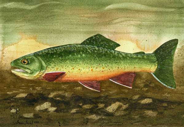 Fly Fishing Brook Trout Fish Art Print featuring the painting Brook Trout by Sean Seal
