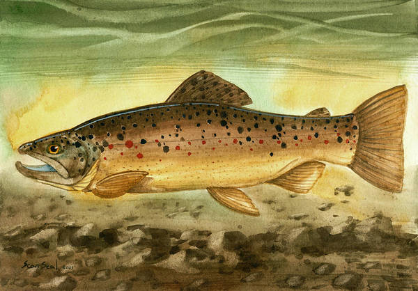 Fish Trout Brown Fishing Art Print featuring the painting Brown Trout by Sean Seal