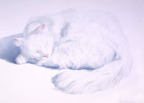 Animal Art Print featuring the painting White On White by Tom Wooldridge