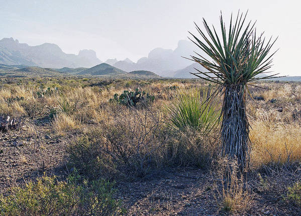 Dagger Art Print featuring the photograph Big Bend National Park 2 by Luc Novovitch