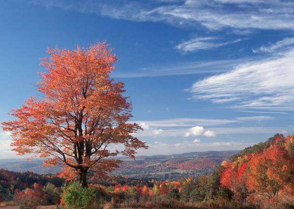 Fall Art Print featuring the photograph Top Of The World by Raju Alagawadi